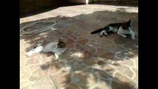 Office cats/Офис котки