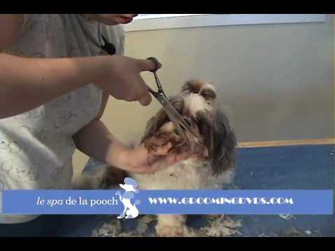 how to groom a shih tzu puppy cut
