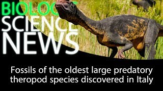 Science News - Fossils of the oldest large predatory theropod species discovered in Italy