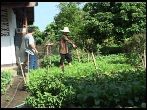 สวนหลังบ้าน ผักปลอดสารพิษ