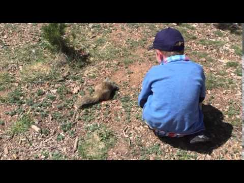 petting squirrel in Grand Canyon