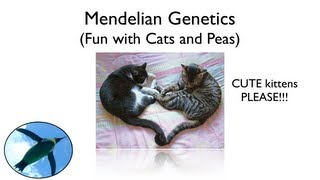 Mendelian Genetics - Fun with Cats and Peas