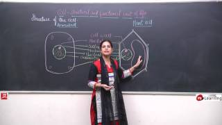 CELL STRUCTURE AND FUNCTION 03