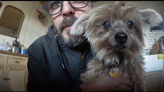 ✔ DiResta My 5 Pets (400k Thank You)