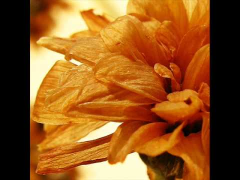 Отцвели хризантемы - Валенти́на Пономарёва