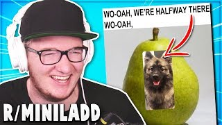 r/MiniLadd BEST Of ALL TIME Reddit Posts #5