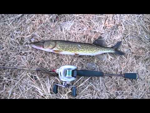 Fishing report - My First Fish for 3/1/2011 (TeamRippnLipz1).mov Video