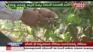 ఔషధ మొక్కలు పెంచాలంటున్న ఉద్యాన శాస్త్రవేత్త... | Mahaa Raithu Anna