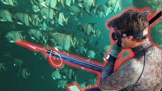 Spearfishing for Cobia, Dolphin, Kingfish and Snapper in the Gulf of Mexico