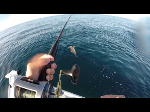 cobia dolphin offshore fishing in microskiff