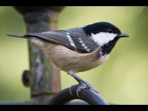 Пение птицы на дереве. Калининград, 2016 г. Парк скульптуры. О. Канта