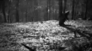 Bigfoot in Alabama, Witness of the unknown EP-10