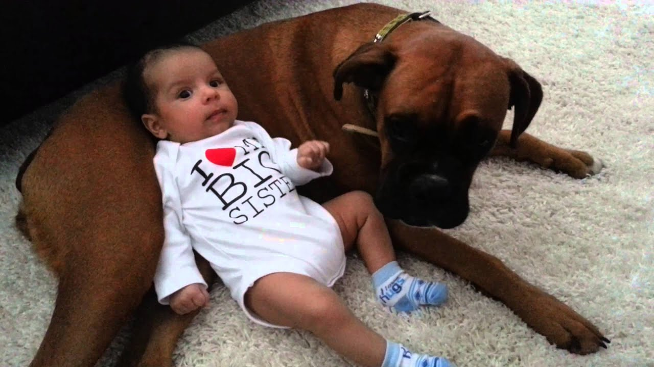 Cute Baby Uses Boxer Dog As Pillow Youtube