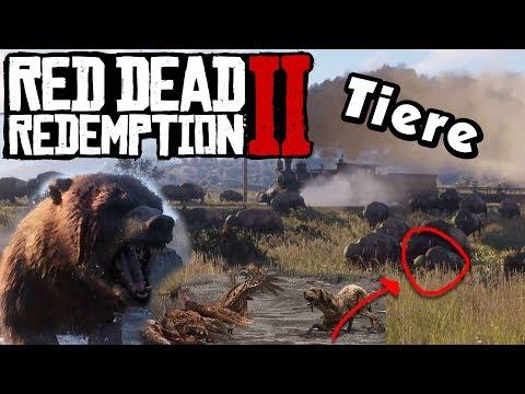 TIERE: Verhalten, Jungtiere und jagen! - Red Dead Redemption 2 News - Deutsch