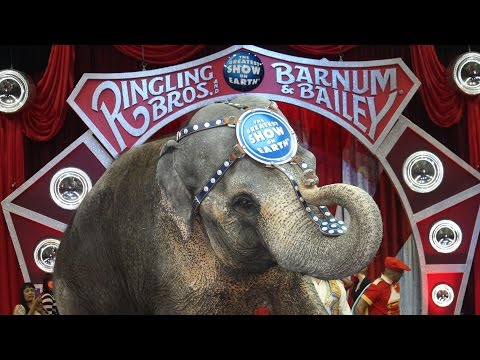 Ringling Bros. Animal Abuse Ends Elephant Acts