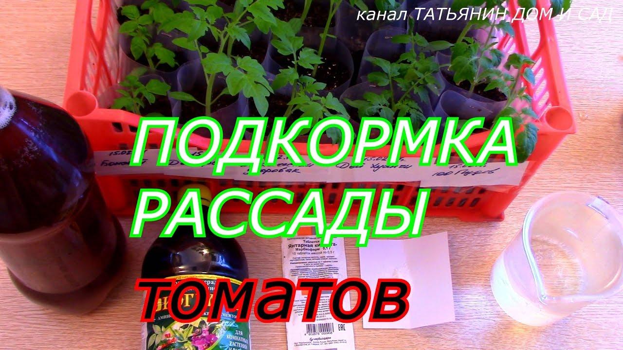 Народные подкормки для рассады томатов 208