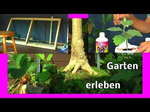 Garten mal anders Eierbaum und anderes aus dem Garten erleben