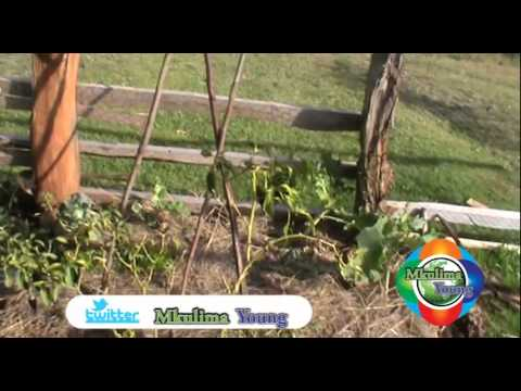 Mkulima Young Champion - Medical couple doctoring fruits into vitamin rich fresh juices