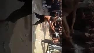 10 muhharam video