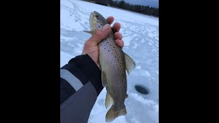 First-Ice Ice-Fishing! (2018-19 season, Twin Tiers)