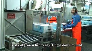 Fishing and processing on a freezing trawler.