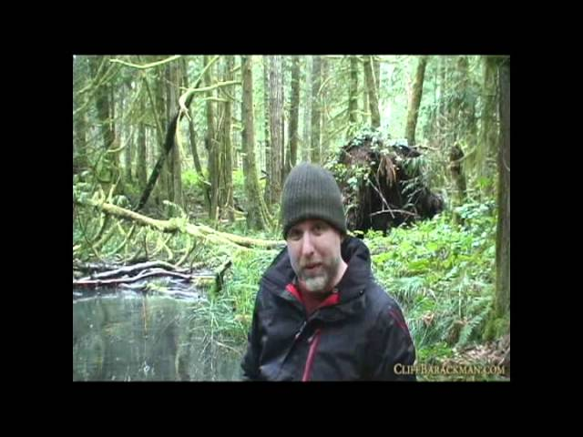 Bogs, Swamps, and Ponds