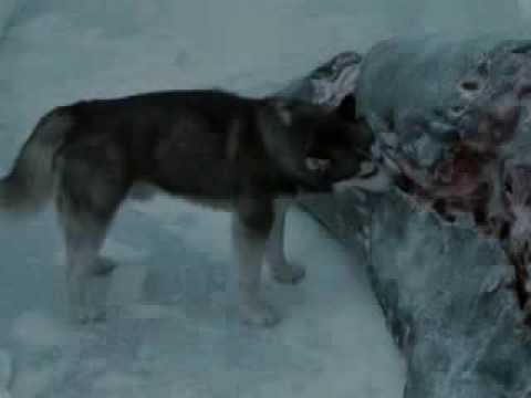 Eight Below Part 9