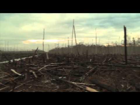 Tropical Rainforest Deforestation