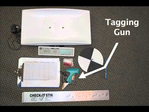 Fish tagging kits youtube for Fish tagging kit