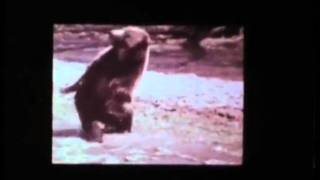 ABC-TV Animal World promo commercial 1970
