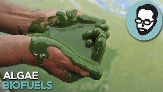 Is Algae The Fuel Of The Future? | Answers With Joe