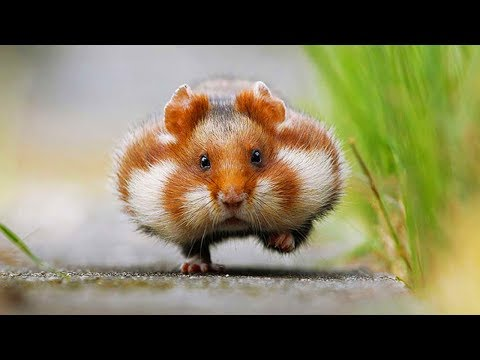10 Cute Animals That Can Actually Kill You