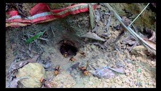 Thăm qua mấy tổ ong đất bắt về nuôi sau 2 tuần | CHANNEL Khám Phá