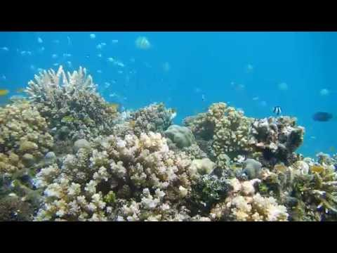 Coral reef offshore from Pondok Sari, Permuteran, Bali Indonesia
