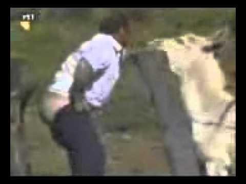 Womwn Sex mit einem Esel