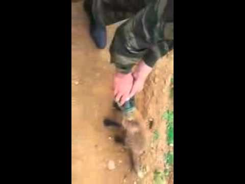 Fox cub comes to people for help  Beuatiful Video