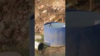 Dog's world ( puppy preserving food for himself)