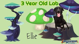 3yo Lab Mix (Ellie) | Board and Train Program | Best Dog Trainers in Delaware | OLK9 Training