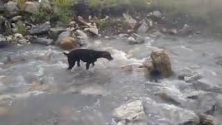 Cool Dog Videos - Dobermans Dogs Having Fun Kids Funny
