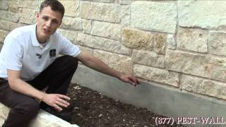 Bark Scorpion Treatments - Bulwark Exterminating Scorpion Control