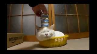 FUNNY CAT VIDEOS PART 5