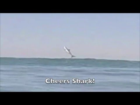 CA Surfer Drew Palumbo Films a Great White Shark Breaching (Jumping) Surfing at Sunset Beach 4/18