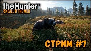 The Hunter: Call of the Wild ( Стрим #7 )
