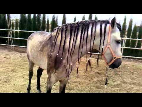 Nudos, trenzas y otros peinados de caballo