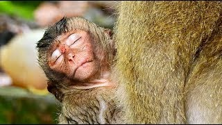 OMG! FULL TEAR! Pity Poor baby Lori so weak ,cool much/Lori hug mom cos she need warm