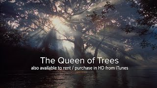 The Queen of Trees - OFFICIAL