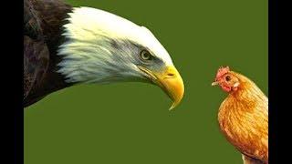 "11/10/18 Children's Story ""Chicken or Eagle"""