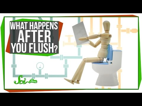 What Happens After You Flush? video