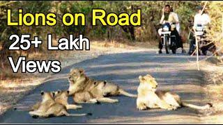 क्या हुवा जब शेर के जुंड ने रास्ता रोक लिया ? What happened when the lion's pride stopped road?