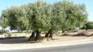 Ne3ma - Nari 3la Zarzis  السيدة نعمة  -  ناري على جرجيس